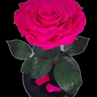 малиновая фуксия вип роза в колбе