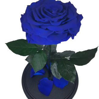 синяя вип роза в колбе купить 32 см