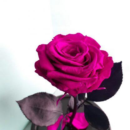 малиновая вечная роза в колбе купить