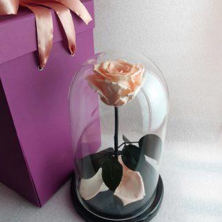 персикова троянда у склі купити
