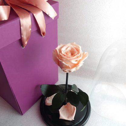 персиковая роза в колбе купить