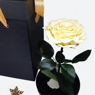 бежевая вечная роза в колбе
