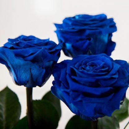 доставка цветов Киев букет синих роз