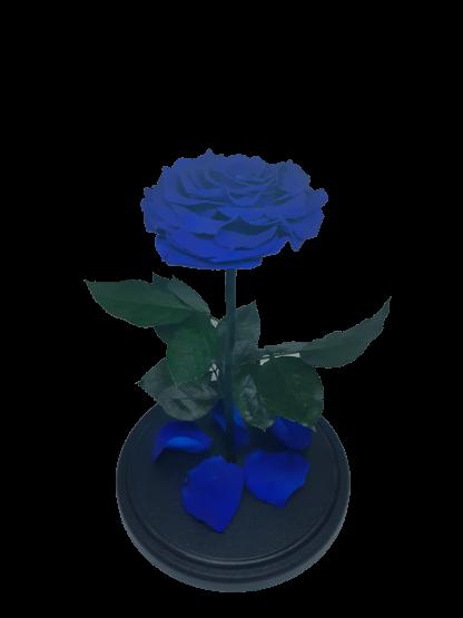 синяя вип роза в колбе купить