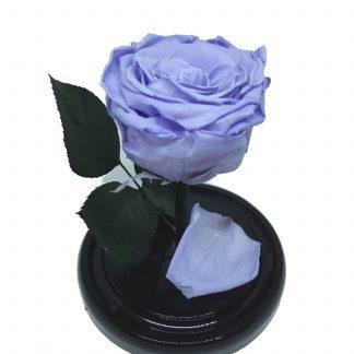 вечная роза в колбе купить