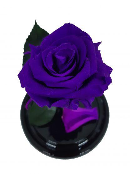 неувядающая фиолетовая роза в колбе
