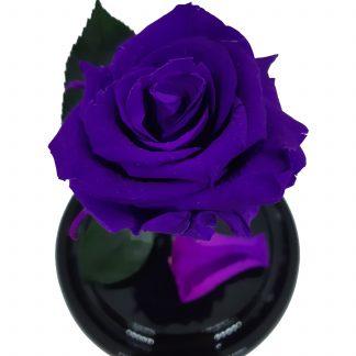 роза в колбе купить киев