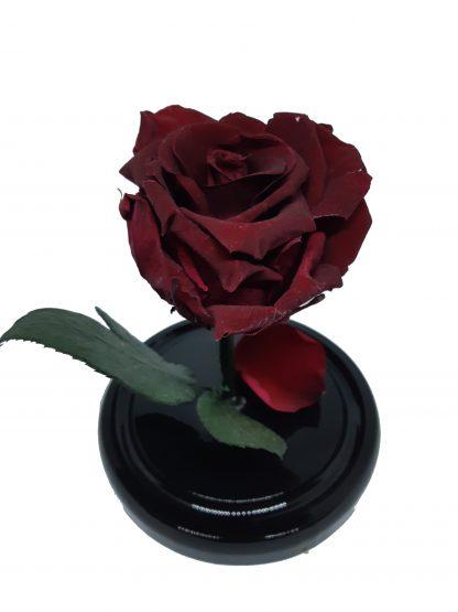 бордовая роза в колбе купить