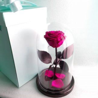 малиновая роза в колбе купить