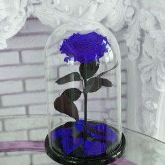 синяя вечная роза в киеве
