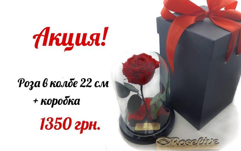 что подарить на 8 марта розу в колбе