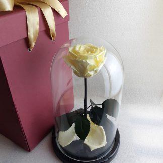 бежевая роза в колбе