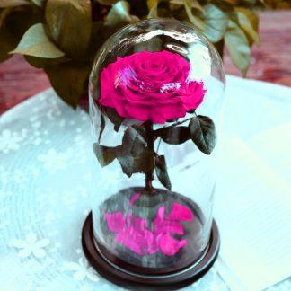 что подарить девушке малиновая вечная роза в колбе