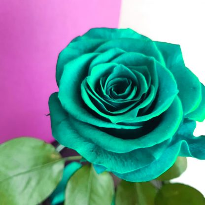 роза в колбе киев бирюзовая